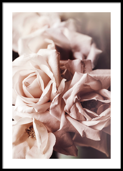 Dusty Pink Roses No1 Poster