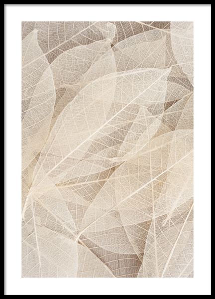 Skeleton Of Leaves Poster