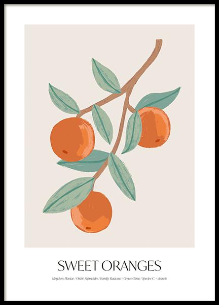 Sweet Oranges Poster
