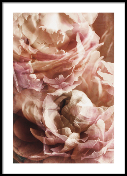 Rustic Roses No2 Poster