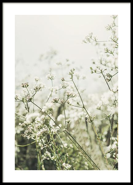 Wild White Flowers Poster