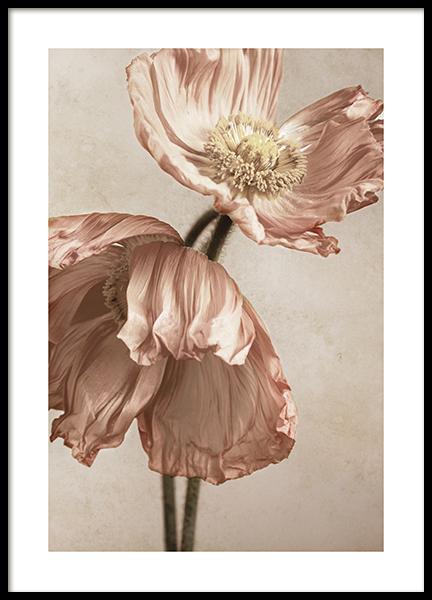 Blushing Poppies No1 Poster
