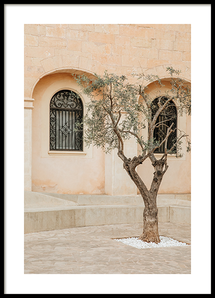 Lonely Olive Tree Poster