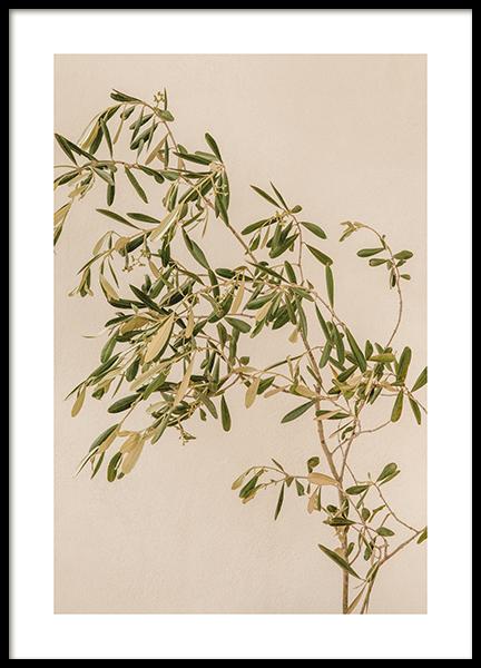 Mediterranean Olive Branch Poster