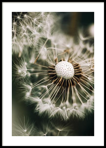 Dandelion in Green Poster