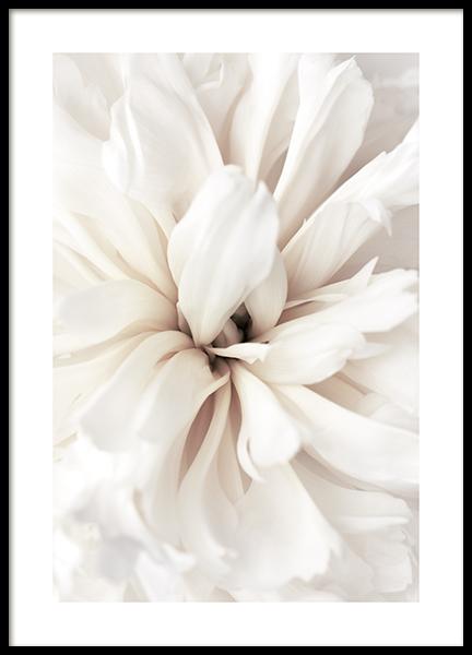 Close Up Blossom Poster
