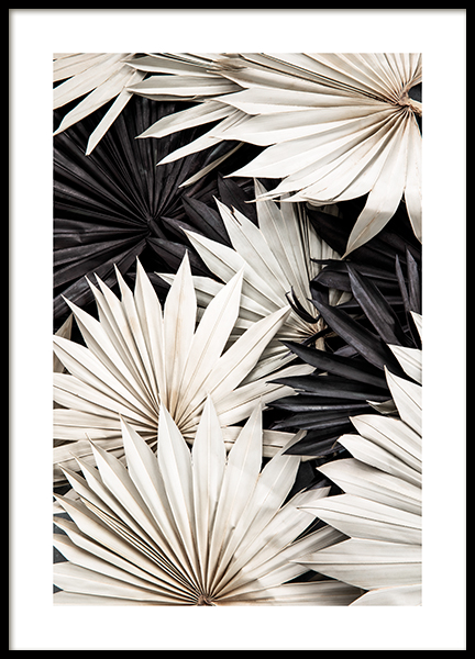 Contrasting Palm Poster