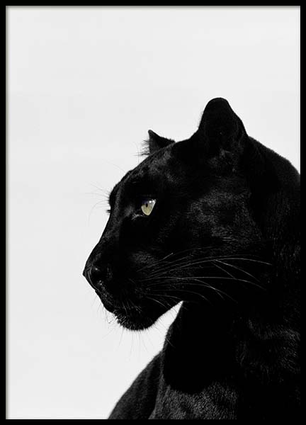 Black Panther Poster in der Gruppe Poster / Tiere bei Desenio AB (2273)