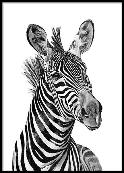 Zebra Black And White Poster