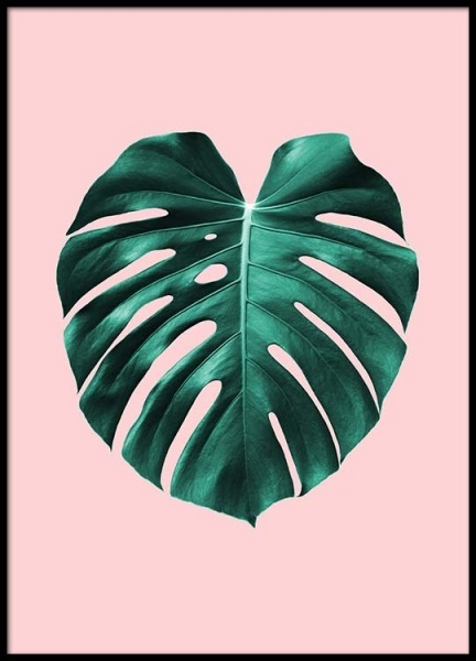 Monstera On Pink Poster in der Gruppe Poster / Botanik bei Desenio AB (2435)