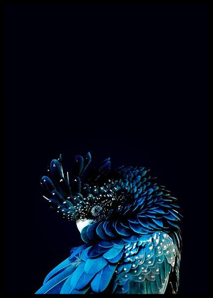 Blue Cockatoo Poster