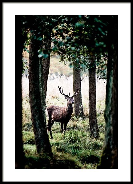 Stag In Forest Poster in der Gruppe Poster / Naturmotive bei Desenio AB (2743)