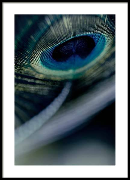 Peacock Feather Close Up Poster in der Gruppe Poster / Fotografien bei Desenio AB (2860)