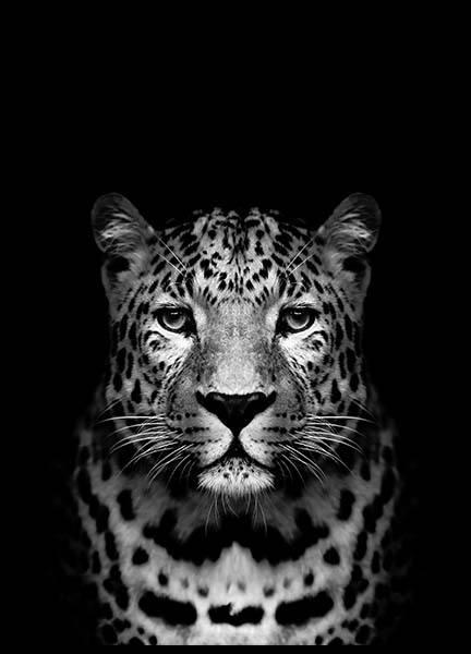 Leopard B&W Poster