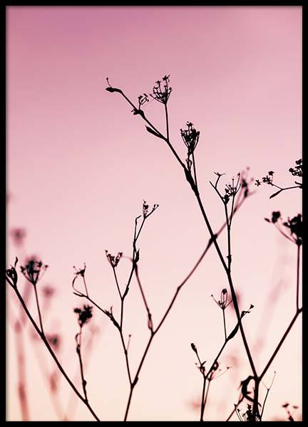 Plants At Pink Sunset Poster in der Gruppe Poster / Naturmotive bei Desenio AB (2967)