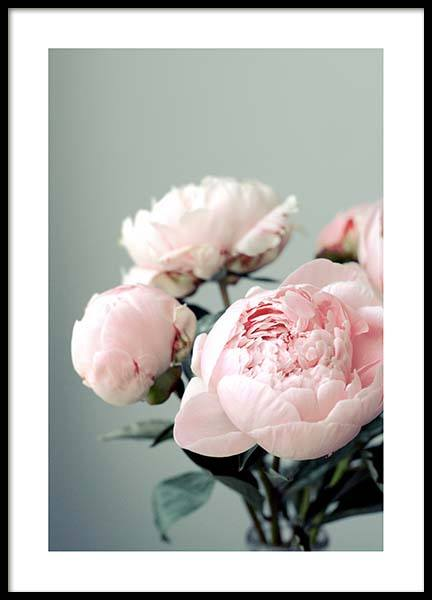 Pink Peonies On Green Poster