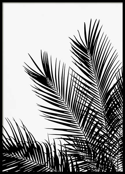 Black Palm Tree One Poster in der Gruppe Poster / Botanik bei Desenio AB (3523)