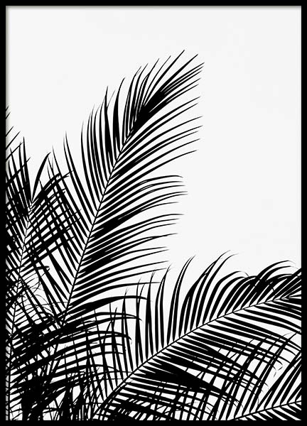 Black Palm Tree Two Poster in der Gruppe Poster / Botanik bei Desenio AB (3524)