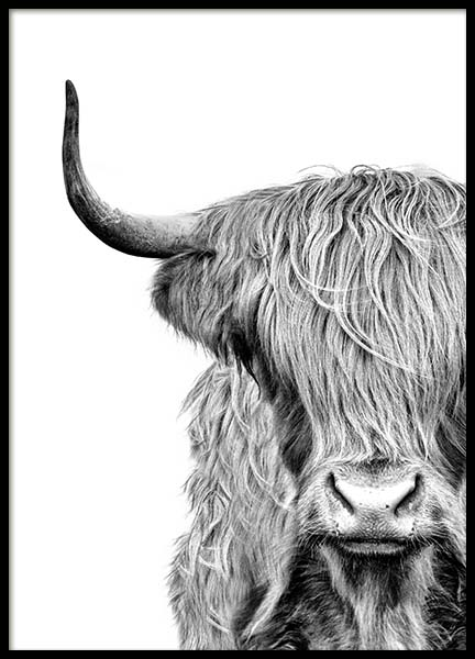 Highland Cow Close Up Poster in der Gruppe Poster / Tiere bei Desenio AB (3638)