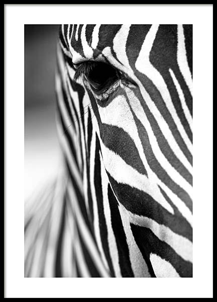 Zebra Close Up Poster