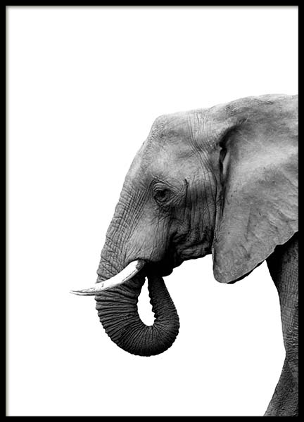 Elephant From Side Poster in der Gruppe Poster / Tiere bei Desenio AB (3893)