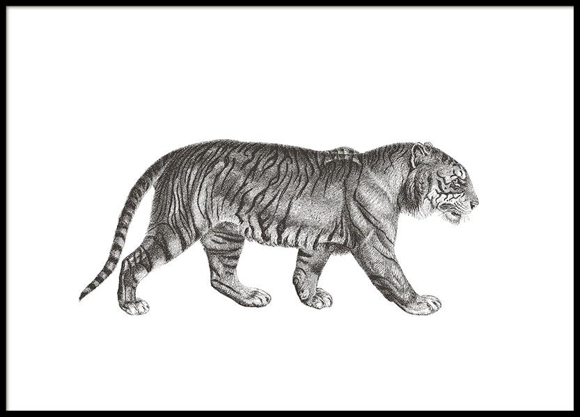 Tiger Illustration, Poster