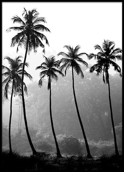 Palm Trees, Poster