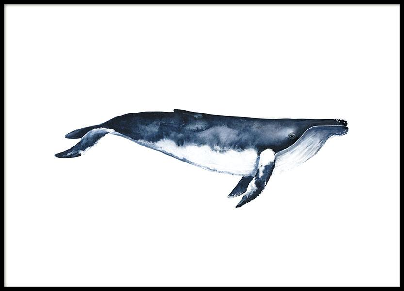 Humpback Whale, Poster in der Gruppe Poster / Illustration bei Desenio AB (8416)