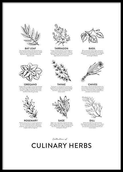 Collection Of Herbs, Poster in der Gruppe Poster / Küchenposter bei Desenio AB (8595)