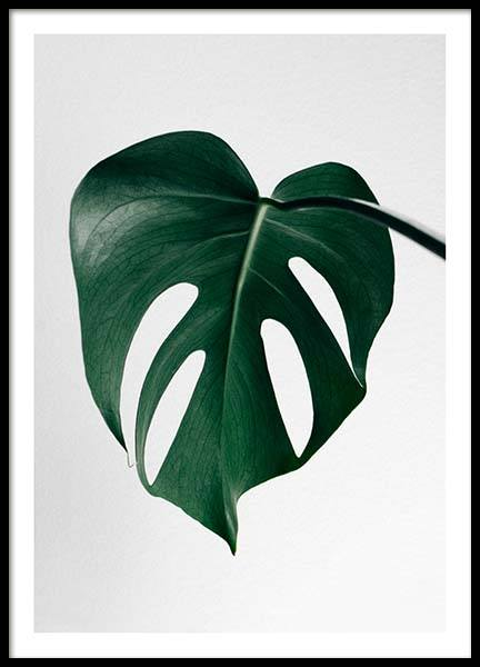 Monstera One Poster in der Gruppe Poster / Botanik / Monsteras bei Desenio AB (8720)