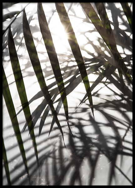Palm Leaves Sunlight Poster in der Gruppe Poster / Fotografien bei Desenio AB (8851)