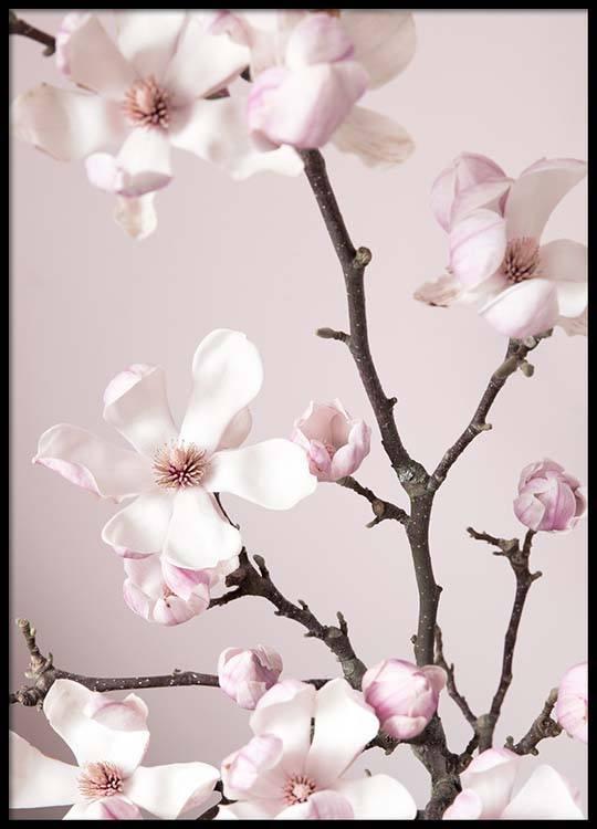 Pink Spring Flower Poster
