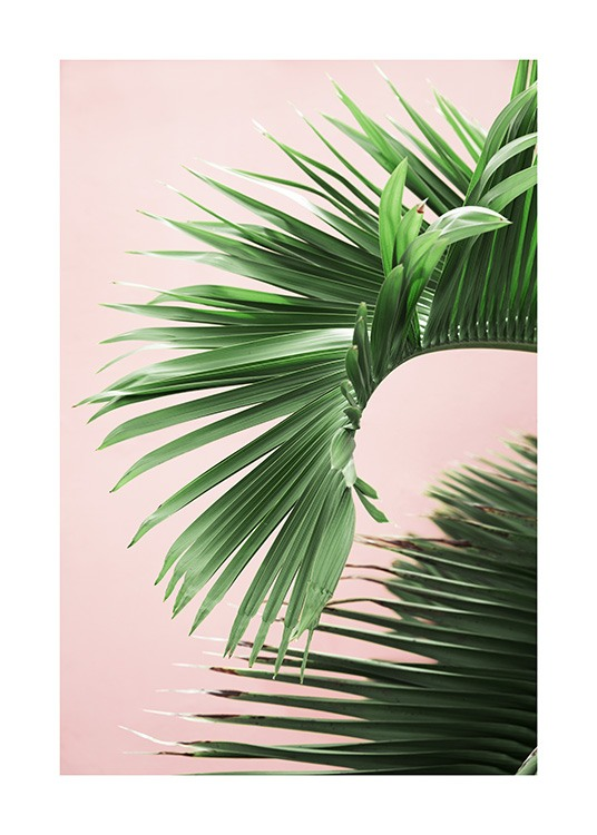 Pink and Green Palm No2 Poster / Fotografien bei Desenio AB (10856)