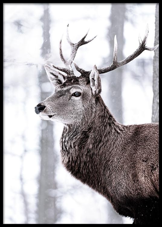 King Deer Poster