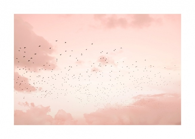 Flock of Birds Poster / Naturmotive bei Desenio AB (12602)