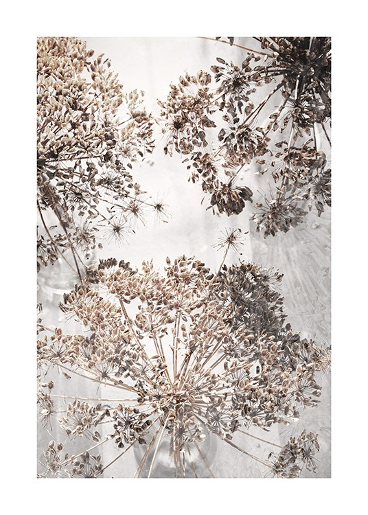 Dried Giant Hogweed No2 Poster / Fotografien bei Desenio AB (12664)