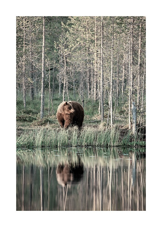 Bear by Lake Poster / Tiere bei Desenio AB (13591)