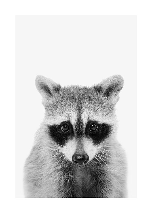 Baby Raccoon Poster / Tiere bei Desenio AB (13863)