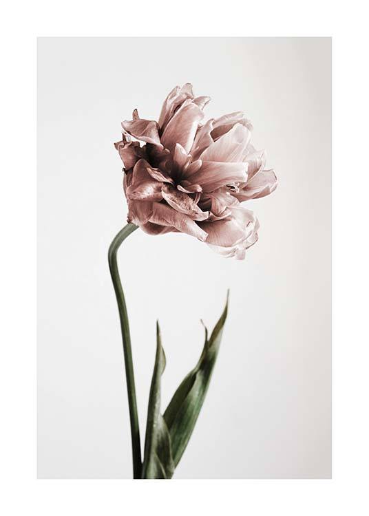 botanik poster mit rosa tulpe bei desenio. Black Bedroom Furniture Sets. Home Design Ideas