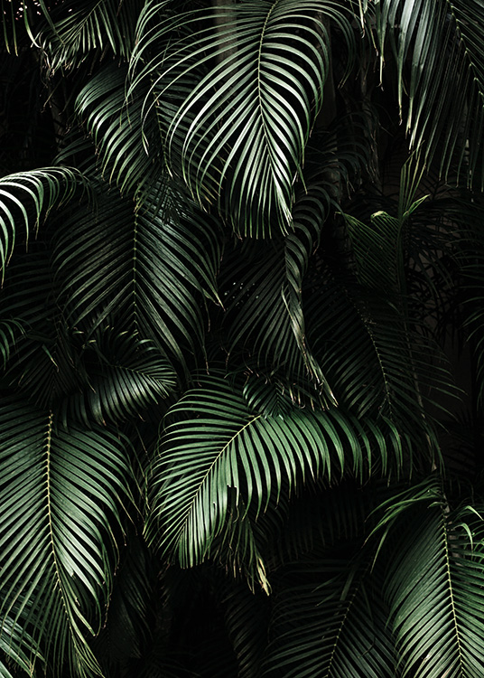 Dark Green Palm Leaves No2 Poster / Fotografien bei Desenio AB (3773)