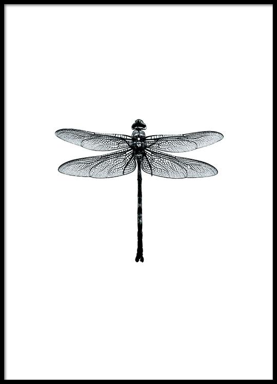 Dragonflies Schwarz Weiss Poster Libellen