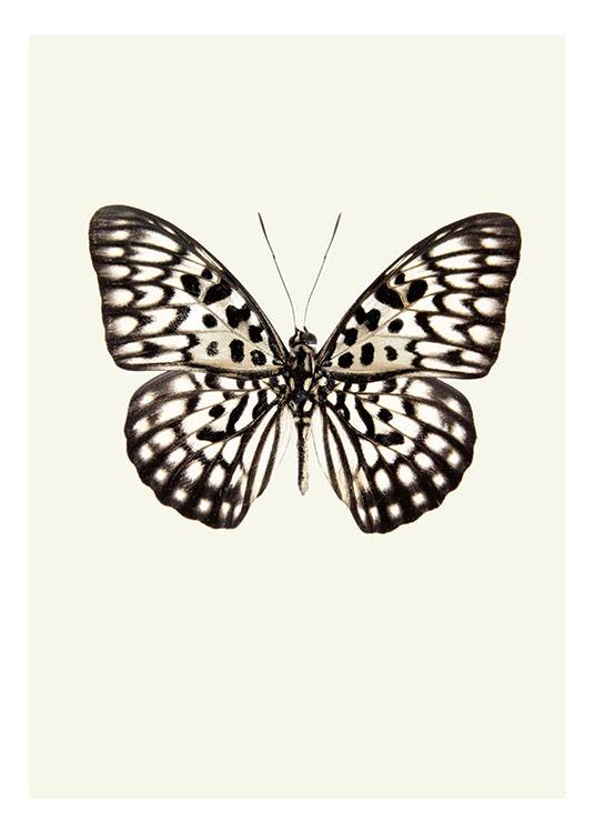 Vintage Butterfly, Poster   / Vintage bei Desenio AB (7946)