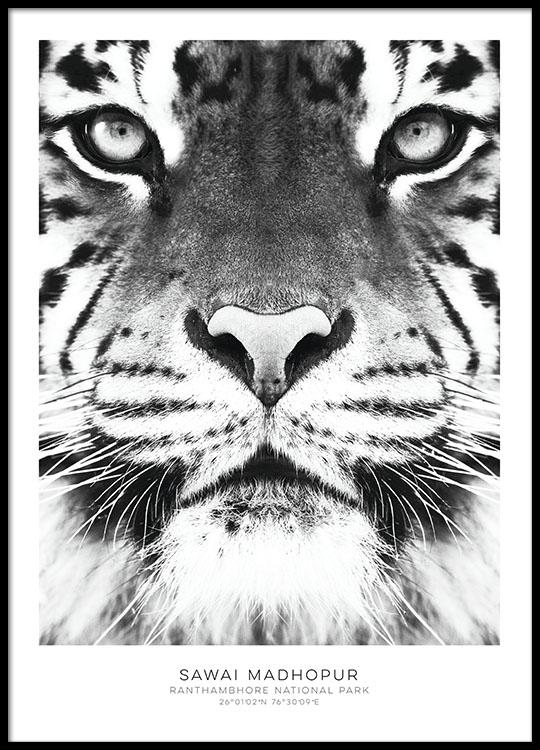 poster mit tiger schwarz wei e poster sch ne plakate und poster online. Black Bedroom Furniture Sets. Home Design Ideas