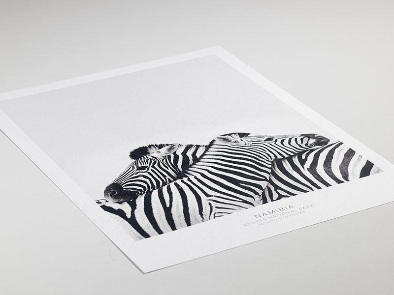 Poster mit Zebra, Kunstfotografien von Tieren