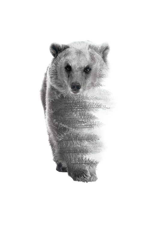 Forest Bear B&W, Poster / Tiere bei Desenio AB (8158)