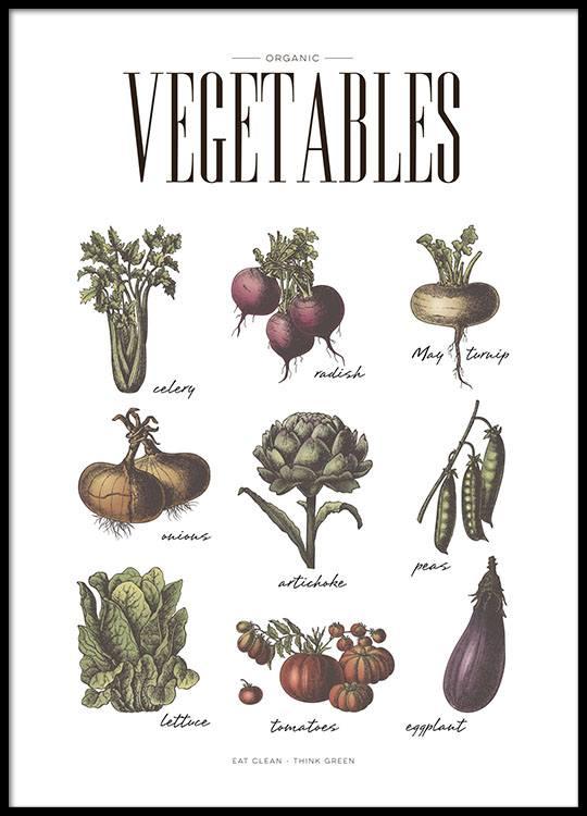 Poster Für Die Küche Mit Gemüsesorten | Plakate Und Küchenposter