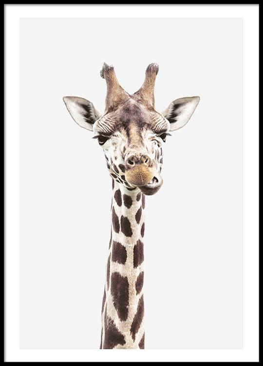 fotobild mit giraffe poster mit tiermotiv poster. Black Bedroom Furniture Sets. Home Design Ideas