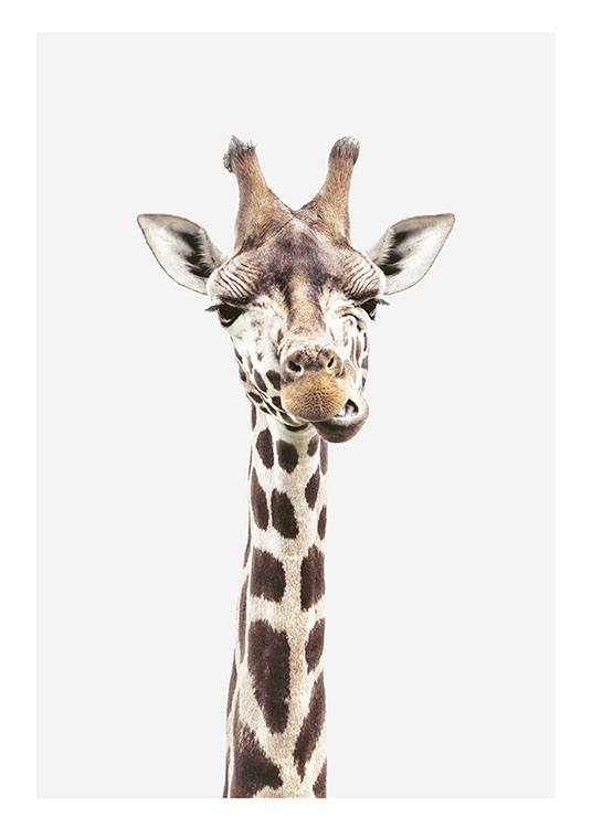 fotobild mit giraffe poster mit tiermotiv poster online kaufen. Black Bedroom Furniture Sets. Home Design Ideas